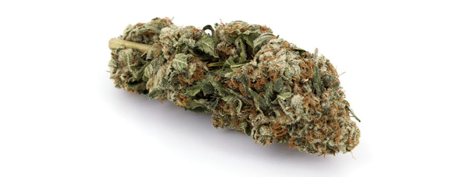 master kush indica strain buy weed online in canada.