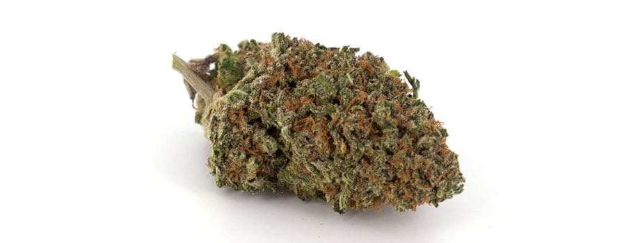 white widow strain buy weed online canada