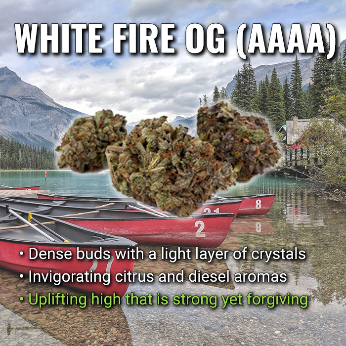 white fire weed