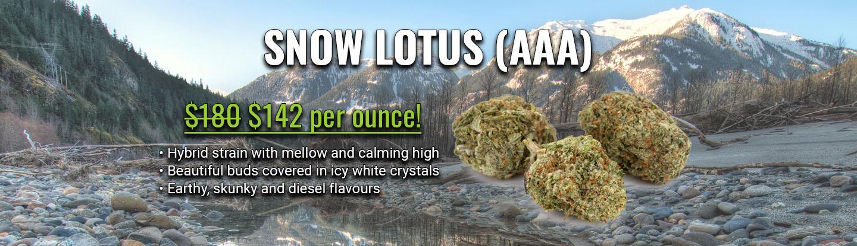 snow lotus AAA